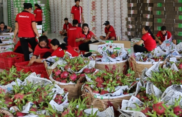 Địa phương lơ là, doanh nghiệp gian lận, nông sản Việt ăn
