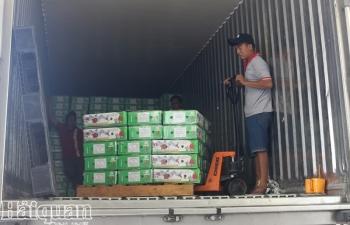 Thấp thỏm xuất khẩu trái cây