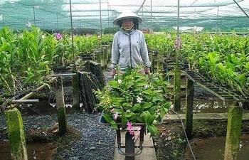 Nhiều loại lan rừng, lan đột biến quy tụ tại Festival hoa lan TPHCM