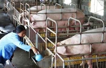 Ít nhất 5 năm nữa mới nên loại kháng sinh ra khỏi thức ăn chăn nuôi
