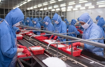 CPTPP vẫn là khối thị trường xuất khẩu hàng đầu của tôm Việt