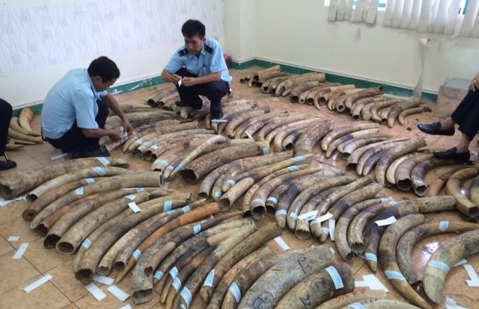 Nhiều bản án nặng cho các đối tượng tội phạm về động vật hoang dã