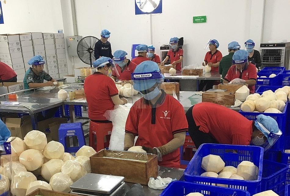 Sơ chế dừa tươi xuất khẩu tại Công ty Vina T&T. Ảnh: DN cung cấp