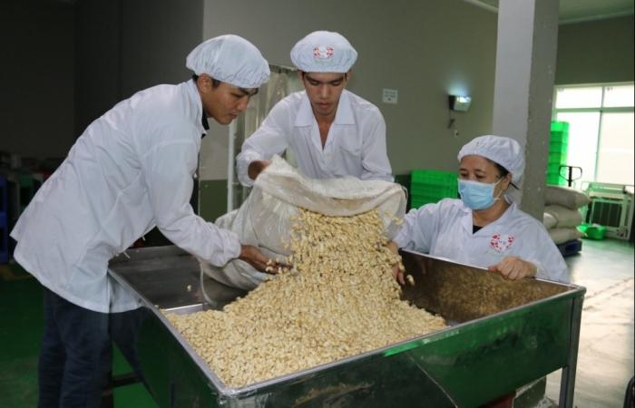 Xuất khẩu hạt điều trông đợi khởi sắc nửa cuối năm