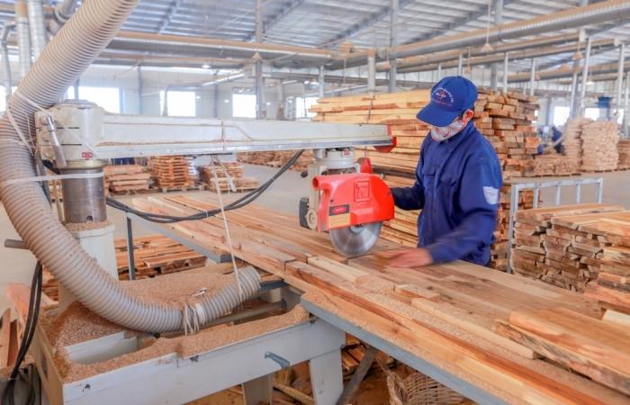 Phân loại thành 2 nhóm doanh nghiệp chế biến và xuất khẩu gỗ