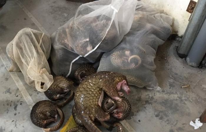 Việt Nam đạt được những bước tiến lớn trong xử lý tội phạm về động vật hoang dã
