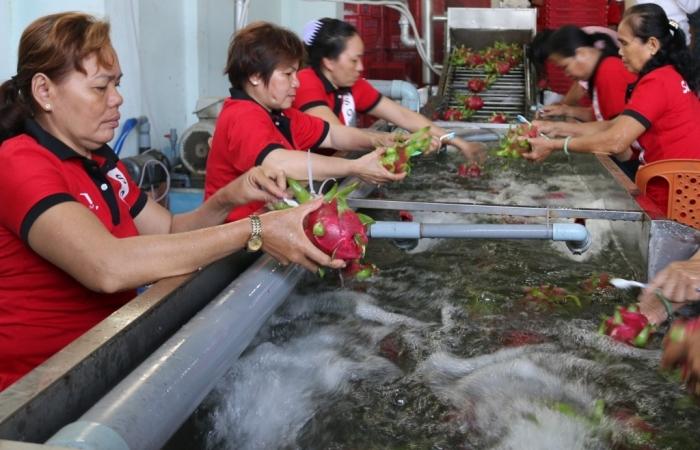 Nhiều lô hàng trái cây chuẩn bị vào EU theo EVFTA