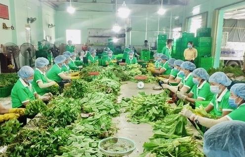 Lượng đặt hàng gói combo nông sản lớn nhưng khả năng giao chỉ đạt 20- 30%