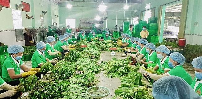 Một HTX tại Tiền Giang thực hiện sơ chế rau củ cho các túi combo nông sản. Ảnh Tổ 970