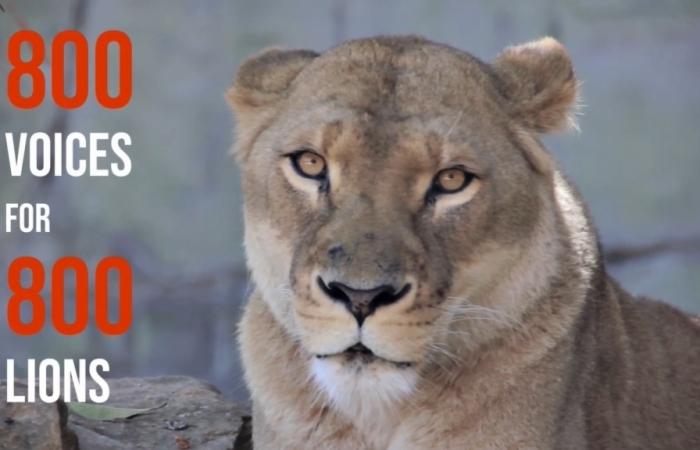 Phát động Cuộc thi sáng tác nghệ thuật bảo vệ sư tử