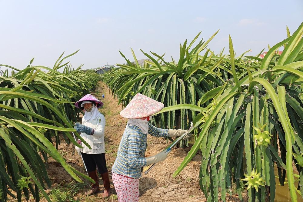 Quyết liệt gỡ vướng để khơi thông thương mại nông sản với Trung Quốc