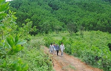 Nhiều địa phương chậm phê duyệt phương án sử dụng đất cho các công ty nông, lâm nghiệp