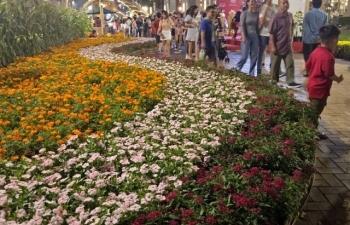 Nhiều nét riêng độc đáo tại Hội hoa Xuân Phú Mỹ Hưng