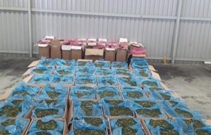 Hải quan TPHCM: Xử lý tiêu huỷ trên 3 tấn lá Khat