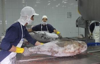 Chỉ còn khoảng 90 tấn hải sản bị vướng chưa xuất khẩu
