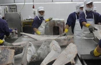 Đảo chiều xuất khẩu cá ngừ sang thị trường ASEAN và Trung Quốc