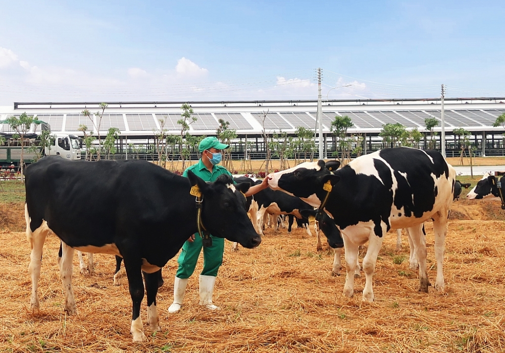 Vinamilk liên tiếp thăng hạng trong Top 50 công ty sữa hàng đầu thế giới