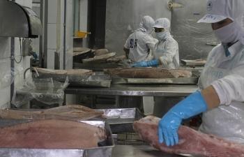 Nhiều lợi thế xuất khẩu cá ngừ sang ASEAN