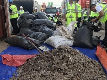 Hơn 5 tấn vảy tê tê giấu trong lô hạt điều thuộc 3 loài tê tê nguy cấp