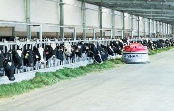 Ứng dụng công nghệ 4.0 trong chăn nuôi bò sữa