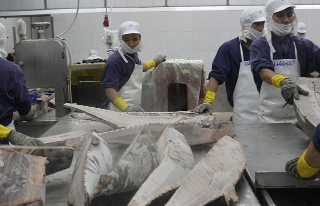 Lợi thế cho cá ngừ xuất khẩu khi EVFTA có hiệu lực