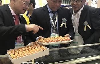 Trung Quốc cấm nhập tôm từ Ecuador, cơ hội cho tôm Việt Nam?