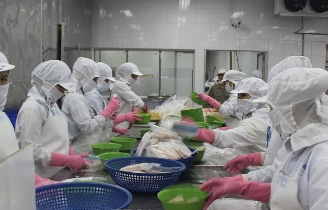 Xuất khẩu cá tra kỳ vọng tăng trưởng những tháng cuối năm