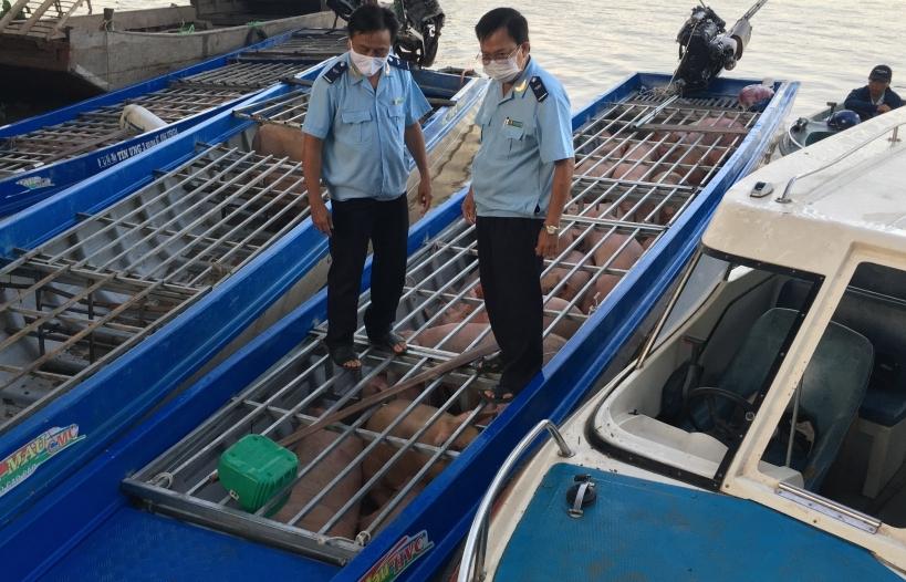 Hải quan Đồng Tháp bắt giữ 3 xuồng máy chở đầy lợn lậu