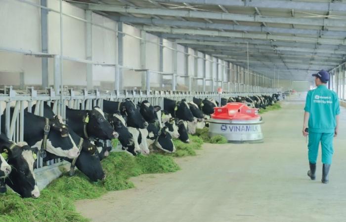 Phát triển nông nghiệp theo hướng bền vững - Nhìn từ hệ thống trang trại bò sữa Vinamilk