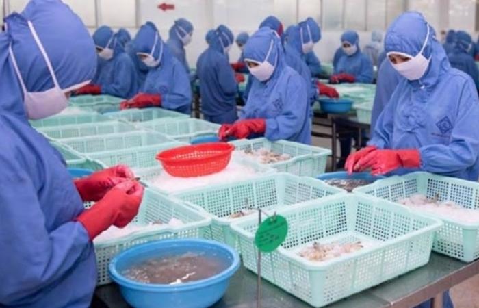 Xuất khẩu tôm của FMC sang Hoa Kỳ đạt gần 50 triệu USD