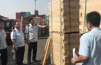 Xem xét khởi tố hình sự vụ xuất khẩu 25 container gỗ gian lận thuế lớn