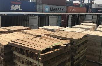 Hình ảnh khám xét 25 container gỗ gian lận thuế lớn
