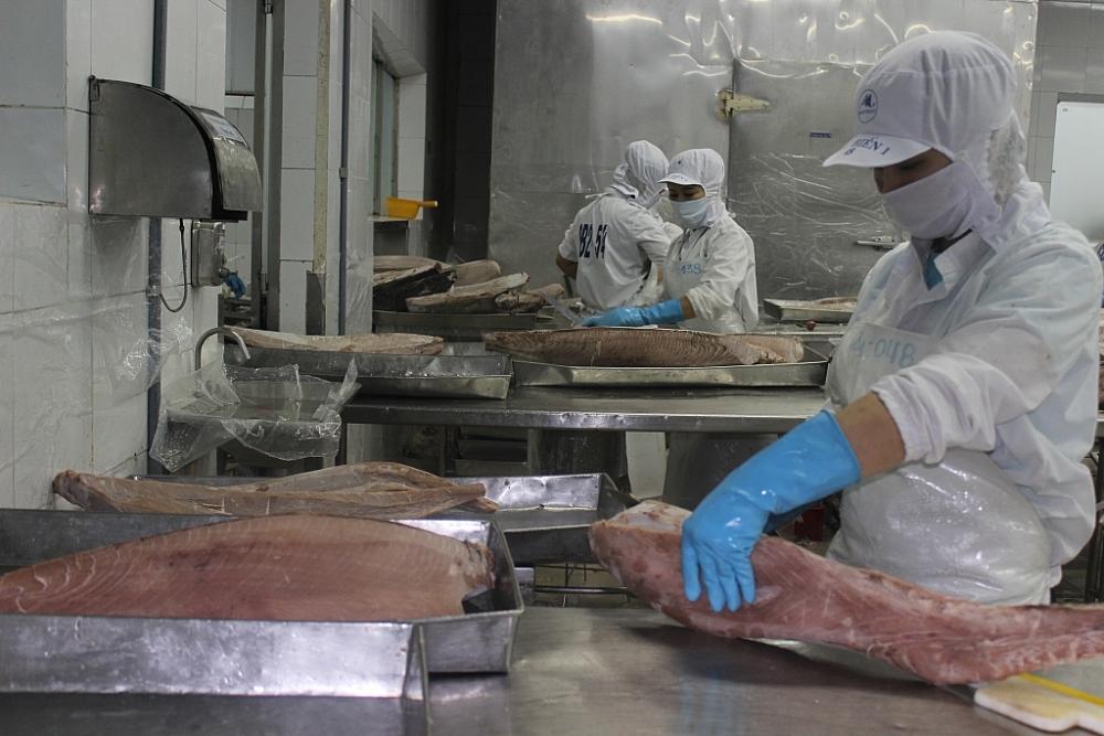 Chế biến cá ngừ xuất khẩu. Ảnh: T.H