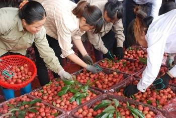 """Trái cây Việt liên tục bước chân vào thị trường """"khó tính"""""""