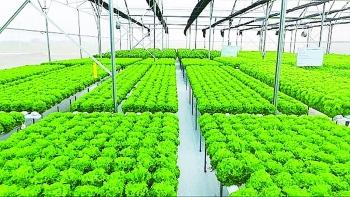 Đất nông nghiệp: Tiềm năng lớn, rào cản không nhỏ