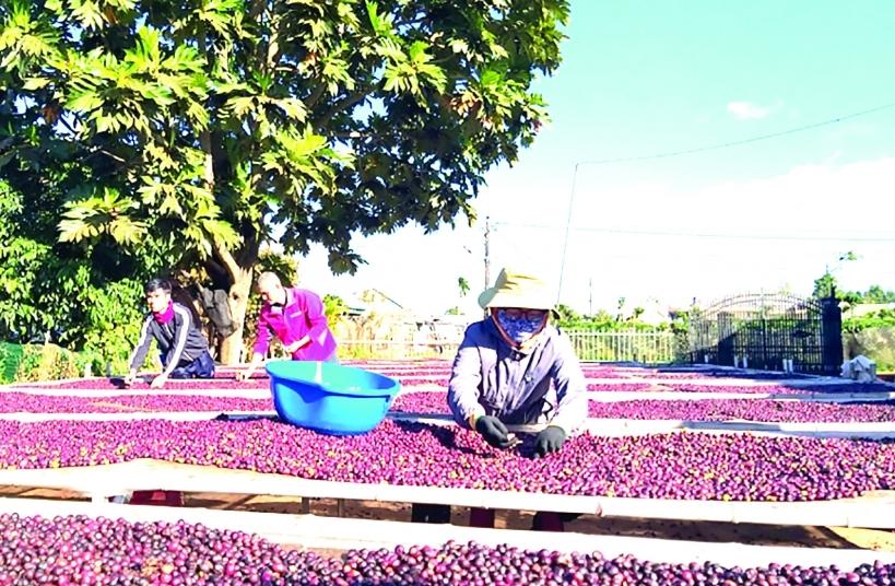 Xuất khẩu cà phê sẽ khởi sắc trong năm nay