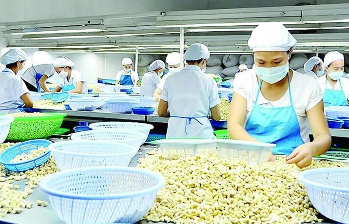Xuất khẩu hạt điều nhắm đích 3,6 tỷ USD