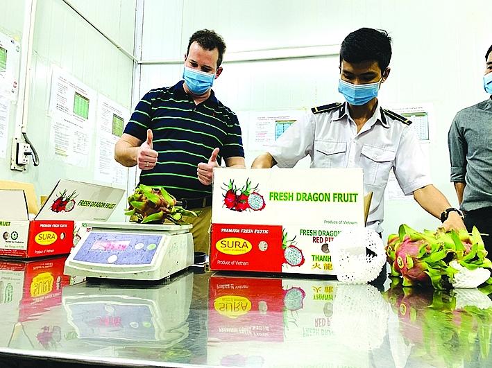 Chuyên gia chiếu xạ Mỹ cùng cán bộ kiểm dịch thực vật kiểm tra mặt hàng trái cây xuất khẩu tại Trung tâm chiếu xạ Sơn Sơn. Ảnh: N.Hiền