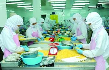 Giá cá tra biến động, lo ảnh hưởng đến nguyên liệu xuất khẩu
