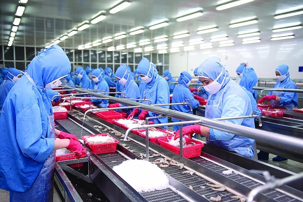 Chế biến tôm xuất khẩu tại Công ty CP Thực phẩm Sao Ta.Ảnh: L.T