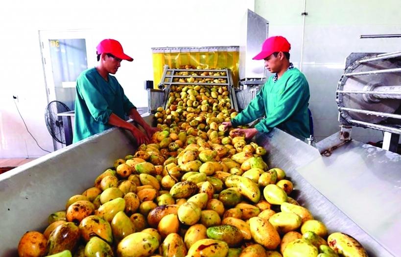 Xuất khẩu rau quả bật tăng tại hầu hết thị trường