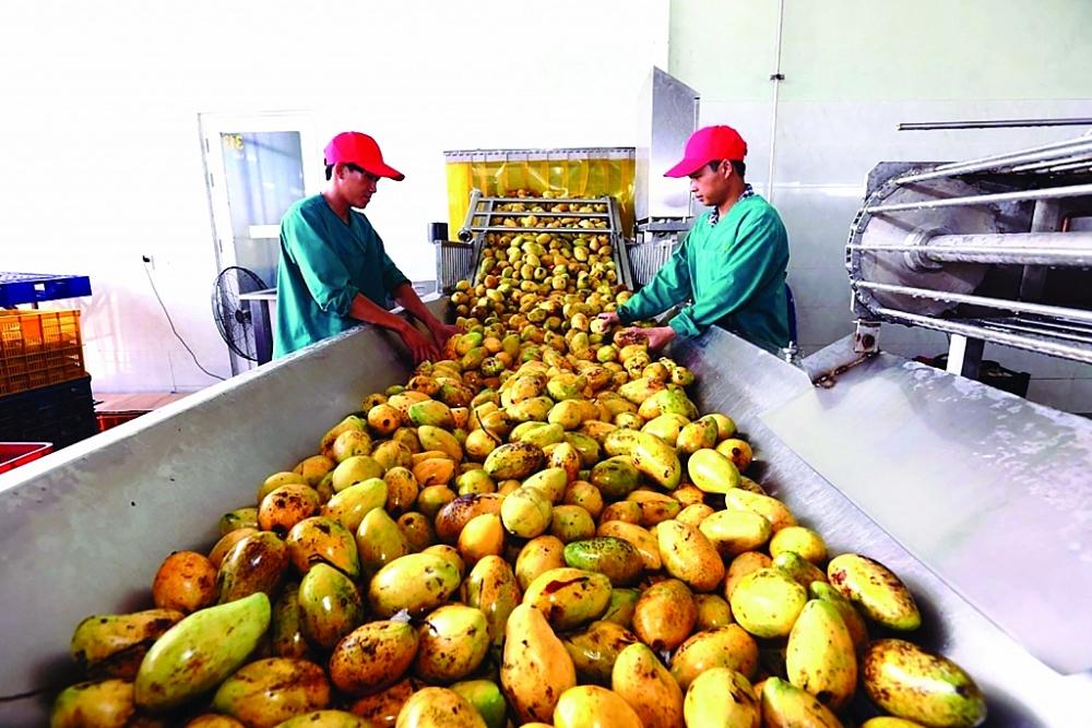 Xuất khẩu rau quả đặt mục tiêu 4 tỷ USD năm 2021. Ảnh: N.Thanh
