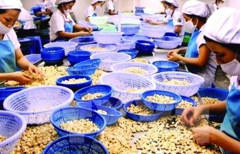 Xuất khẩu hạt điều: Thấp thỏm vì giảm giá