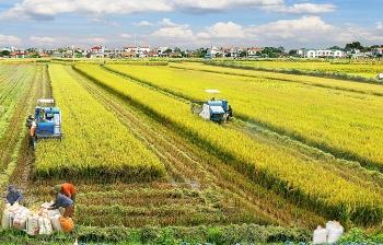 Cần thiết miễn thuế sử dụng đất nông nghiệp