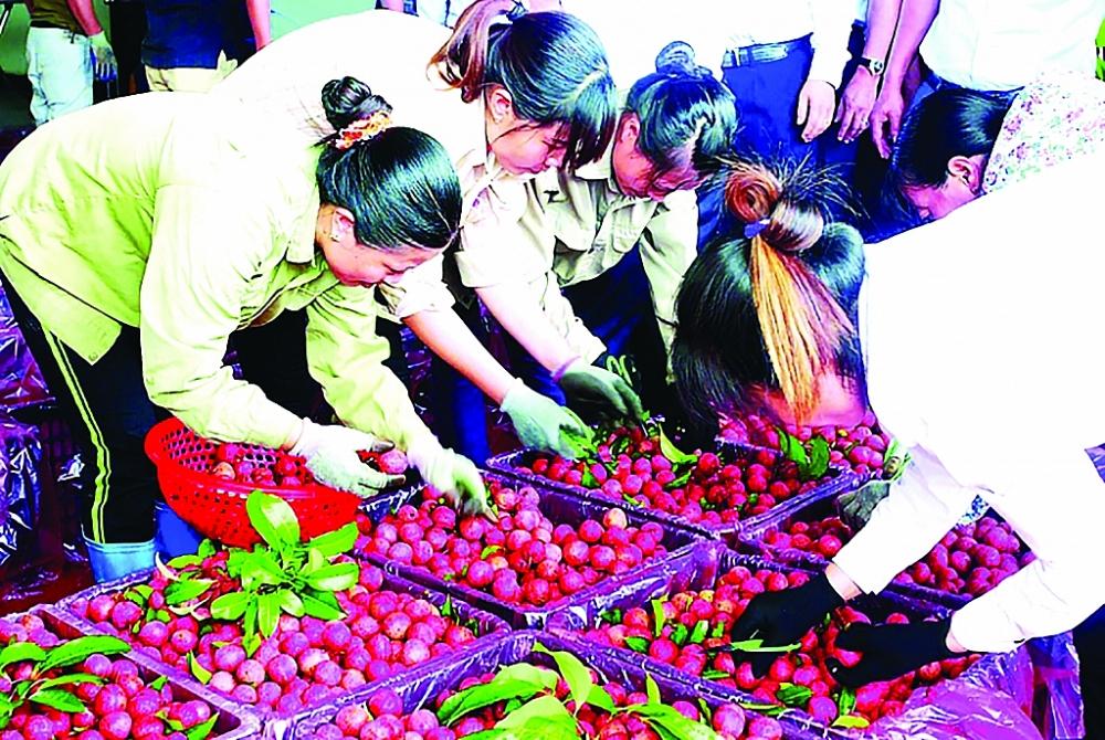 Chi phí logistics quá cao đã và đang gây ảnh hưởng lớn đến sức cạnh tranh của nông sản Việt.  Ảnh: NT