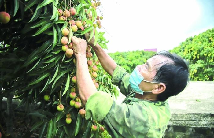 Thủ tướng Chính phủ chỉ thị thúc đẩy sản xuất, lưu thông, xuất khẩu nông sản