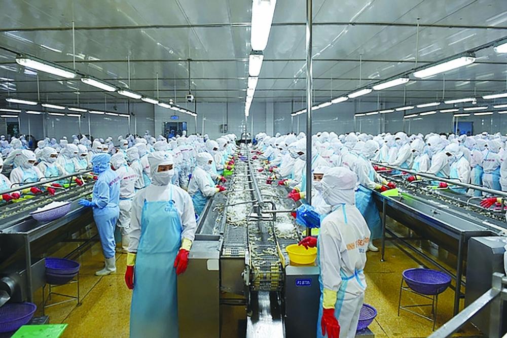 Chế biến tôm xuất khẩu tại Công ty CP Tập đoàn thủy sản Minh Phú. Ảnh: Q.Hiếu