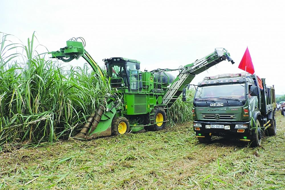 Doanh nghiệp mía đường cho rằng phòng vệ thương mại phải bảo đảm cho người nông dân được hưởng giá mía tương đương với các nông dân trồng mía trong khu vực, khi đó ngành đường Việt Nam mới có cơ may tồn tại. Ảnh: N.Thanh
