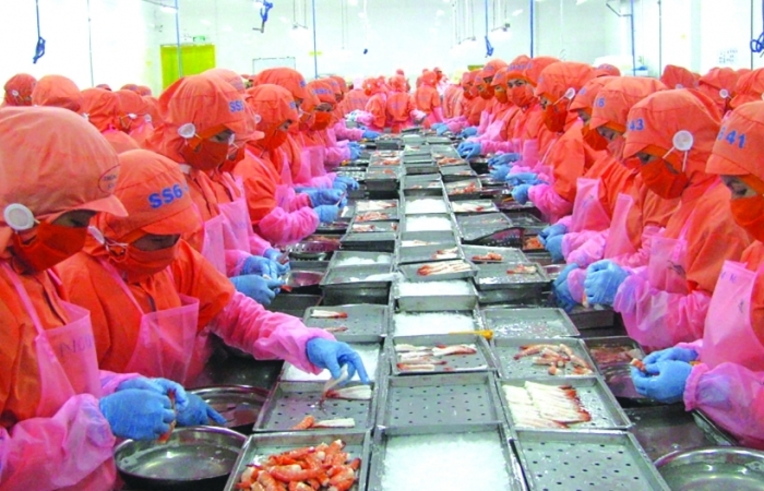 Có EVFTA, giá tôm Việt tại EU vẫn cao hơn Ấn Độ, Ecuador