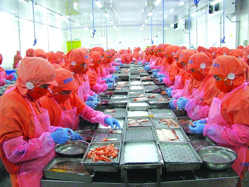 Dự báo, xuất khẩu tôm của Việt Nam trong những tháng tiếp theo vẫn đạt kết quả tăng trưởng tốt do có nhiều lợi thế từ các FTA.  Ảnh: N.Thanh